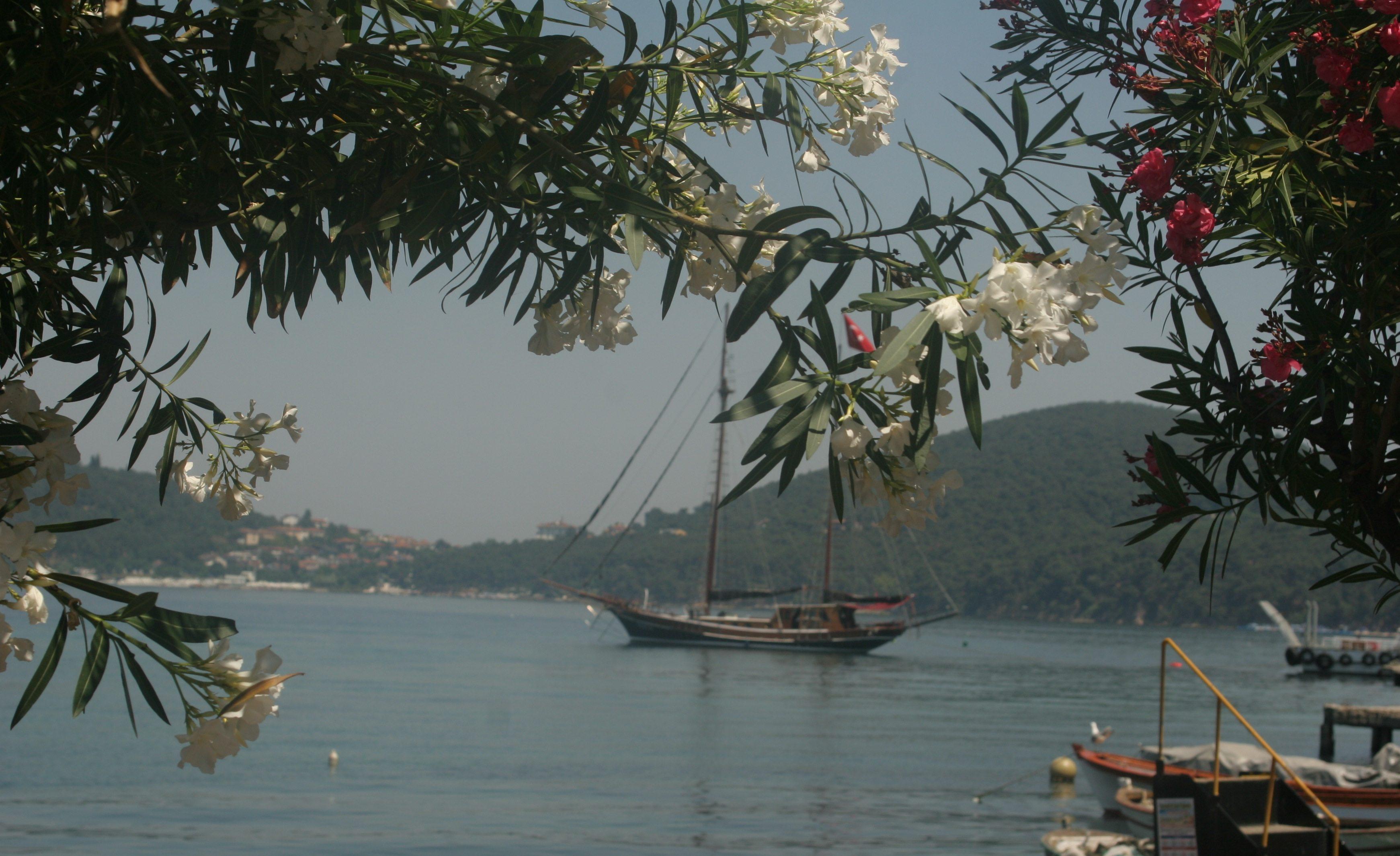 Vapurdan indikten sonra bir cafede oturup çektiğim karelerden biriydi. Önce tekneyi denizle çekmeyi denedim. Sonra bu çiçekleri bulup, teknenin etrafına estetik veren bir çerçeve yaratmayı tercih ettim. Çiçekler ve tekne konulu bir kompozisyon oluştu…