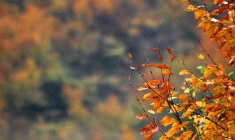 SARI ÇİZGİNİN ÖTESİNDE / Sahibinden Satılık Sonbahar