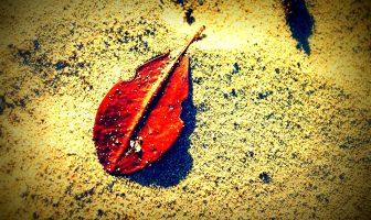 SARI ÇİZGİNİN ÖTESİNDE / Kumsaldaki Yaprak
