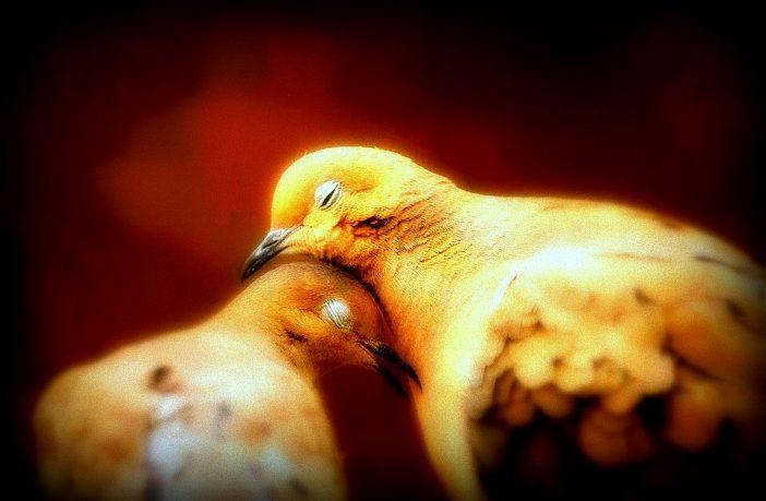 Sarı Çizginin Ötesinde/ Penceremdeki Kuşlar