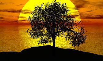 SARI ÇİZGİNİN ÖTESİNDE / Yalnız Ağaç
